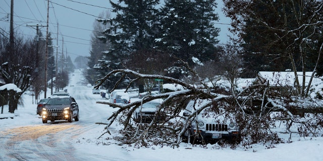 A tree rests on a vehicle, Sunday, Feb. 10, 2019, on a residential street in Tacoma, Wash.