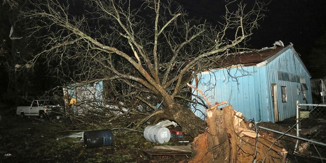 A large tree is down into one of several buildings housing antique cars at Lawrence Motors on Highway 50 in Columbus, Miss., after a tornado struck the area Saturday, Feb. 23, 2019.
