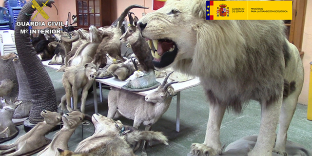 Over 200 stuffed endangered animals were seized.
