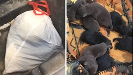 Wisconsin man arrested for allegedly throwing away 8 puppies in garbage bag