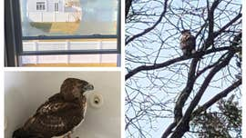 Hawk discovered in bathtub after flying through New Jersey bathroom window: police