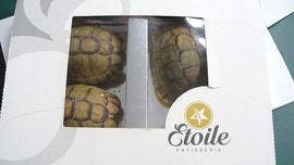Man fails to smuggle tortoises disguised as pastries into Berlin Airport