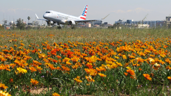 LA airport gets rare super bloom of flowers next to runways 07b51edc456