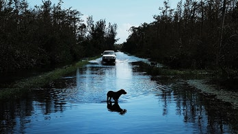 Florida bill would punish people who abandon dogs during hurricanes