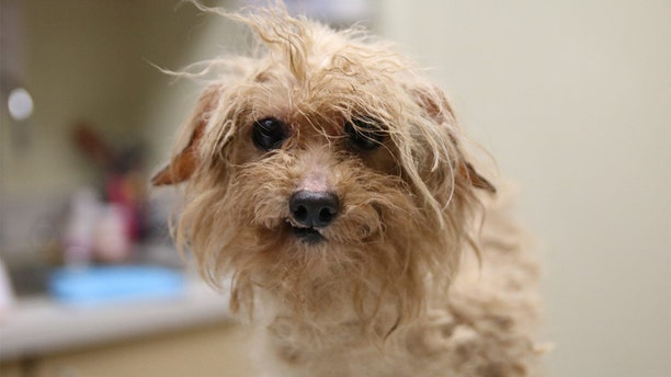More than 700 dogs rescued from 'extreme hoarding' conditions at Atlanta puppy mill