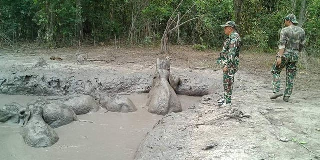 Park rangers took five hours to dig out a path to save six elephant calves after they were found trapped in a muddy pond.