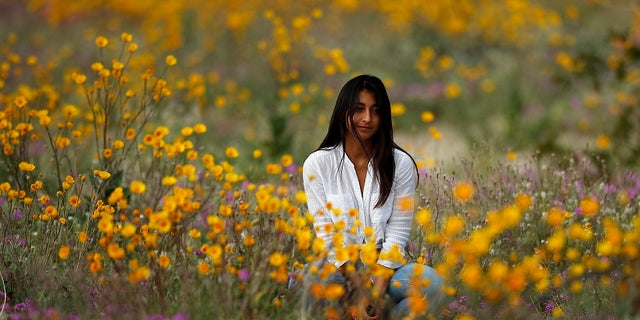 In this Wednesday, March 6, 2019, photo, a woman sits in a field of wildflowers in bloom near Borrego Springs, Calif.  (AP Photo/Gregory Bull)