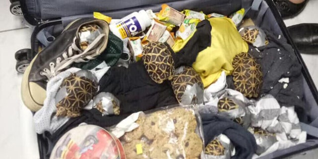 Officials confirmed Monday that the turtles and tortoises — which included at least one threatened species — were found abandoned in the airport's arrivals area.