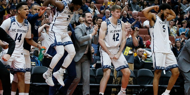 UC Irvine starters guard Evan Leonard (14), guard Max Hazzard (2), forward Tommy Rutherford (42) and forward Jonathan Galloway (5) celebrate in the last seconds of the second half of an NCAA college basketball game against Cal State Fullerton for the Big West men's tournament championship in Anaheim, Calif., Saturday, March 16, 2019. (AP Photo/Alex Gallardo)
