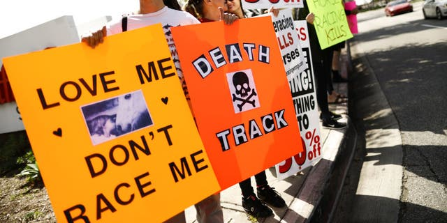 Animal rights activists protest horse racing deaths outside Santa Anita Park on March 10 in Arcadia, Calif. Santa Anita has suspended horse racing after 21 horses died at the famed racetrack since December 26. The track is reportedly eyeing a March 22 date to re-start races as an investigation into the cause of the deaths continues. (Photo by Mario Tama/Getty Images)