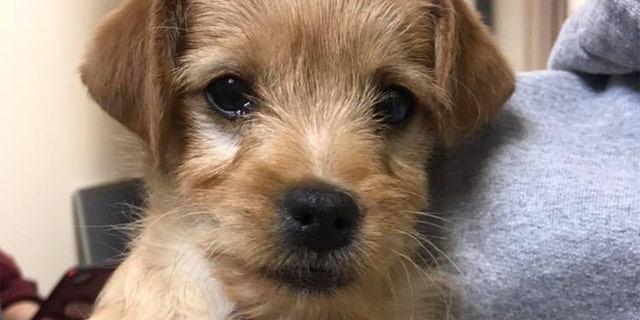 The shelter is warning pet owners to avoid feeding animals human food after the dog died.