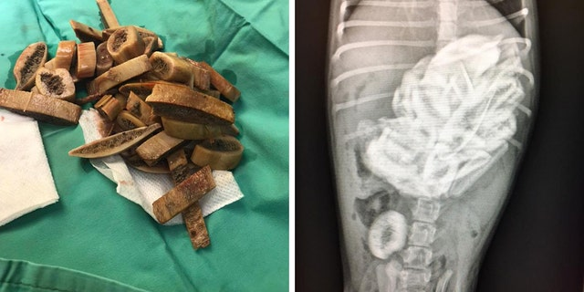 The doctor who performed surgery on the puppy said she never would've guessed the dog ingested 46 ribs.