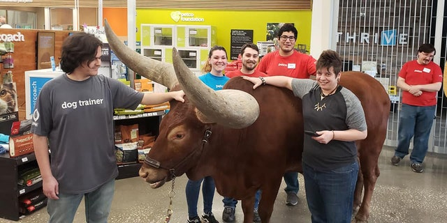 A leashed steer was recently brought into a Houston-area Petco to test the store's welcome policy for pets.