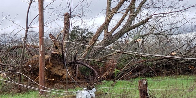 Televised broadcast news footage showed smashed buildings with rooftops blown away, cars overturned and debris everywhere. Trees all around had been snapped bare of branches. (Steven MacLeroy)