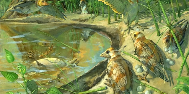 "The specimen, representing a new species called Avimaia schweitzerae, was discovered in 110-million-year-old deposits in northwestern China. It belongs to a group called the Enantiornithes - ""opposite birds"" - which were common all around the world during the Cretaceous Period and lived alongside the dinosaurs. (Credit: SWNS)"