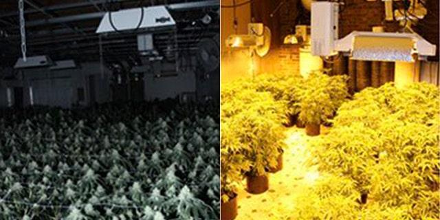 Cops arrest 16 suspects in $35M pot bust in Atlanta | Fox News