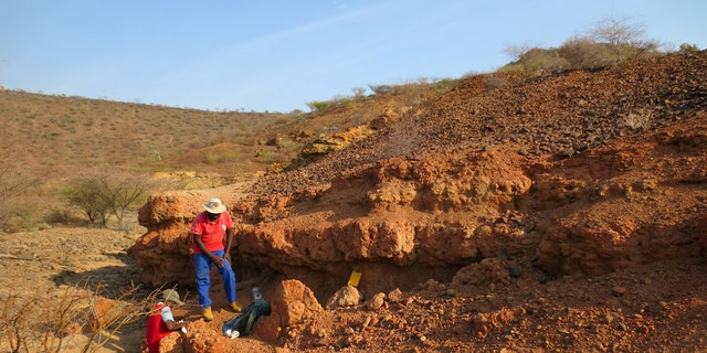 Scientists collecting rock samples for dating the sediments at Nakwai, Kenya, where the Alophia was discovered. The discovery of 22-million-year-old fossilized monkey teeth– described as belonging to a new species, Alophia metios –fills a void between a previously discovered 19-million-year-old fossil tooth in Uganda and a 25-million-year-old fossil tooth found in Tanzania. (Credit: SWNS)