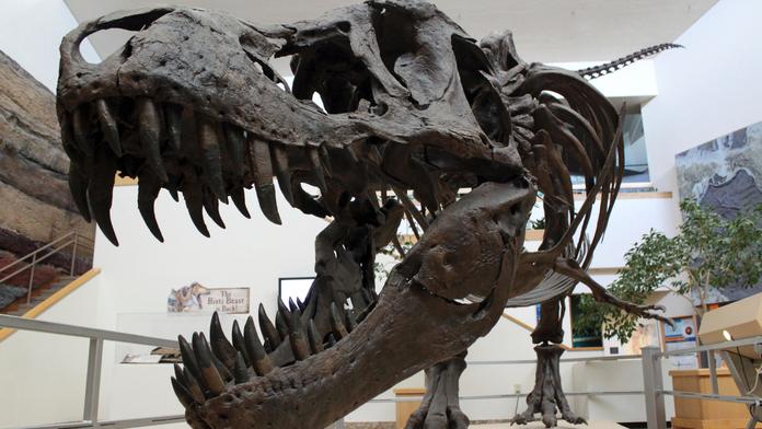 Tyrannosaurus rex costume race at Washington state racetrack goes viral