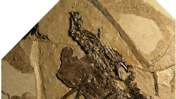 110-million-year-old bird fossil found with egg inside