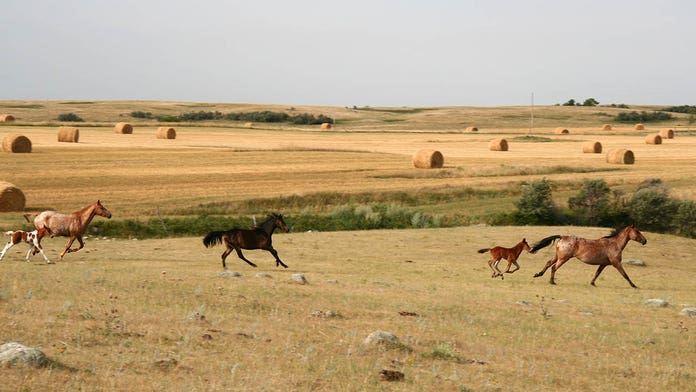 Feds offer $1,000 to people willing to adopt an untrained wild horse or burro