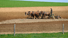 Lancaster County Amish population grows despite urban sprawl