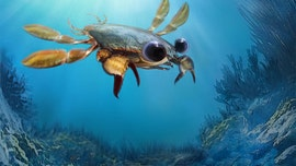 'Utterly bizarre' chimera crab fossil discovered: 'Makes you wonder 'what else is out there'