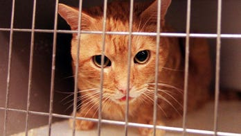 More than two dozen shelter cats mauled to death after pit bulls break out of cage