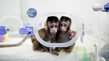 China's human-like monkeys spark concerns
