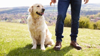 Dog owners are four times more likely to lead an active lifestyle, study claims