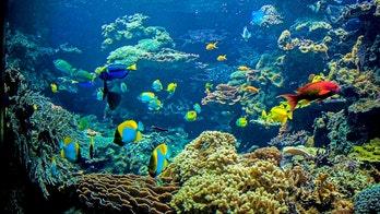 Cafe owner spends $270G on installing massive aquarium in restaurant bathroom