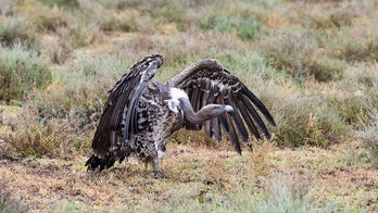 Kansas couple killed in motorcycle crash caused by vulture, officials say