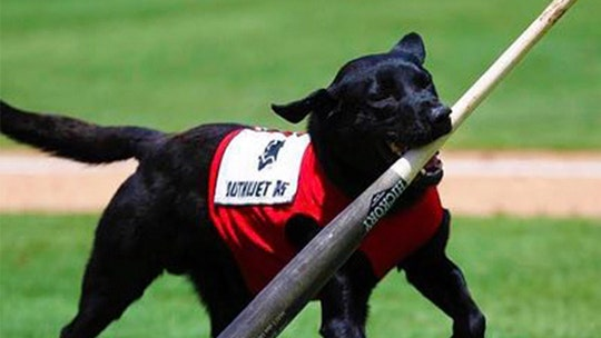 Las Vegas minor league umpire booed for not letting dog fetch baseball bat