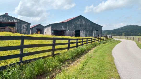 Kentucky barns are being raided, reportedly to fuel 'farmhouse chic' trend