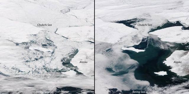 An image on the left shows the iced-over Bering Sea this time of year in 2014. On the right is the Bering Sea melted as of Sunday, March 31.