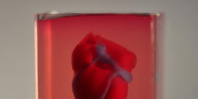 A 3D-printed, small-scaled human heart engineered from the patient's own materials and cells. The Authors.)