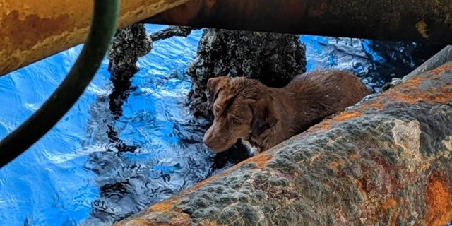 A stranded dog was spotted by oil rig workers clinging to a pole on the platform some 130 miles from shore in the Gulf of Thailand on Friday.