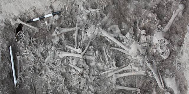 The bones highlight the Crusaders' genetic diversity.