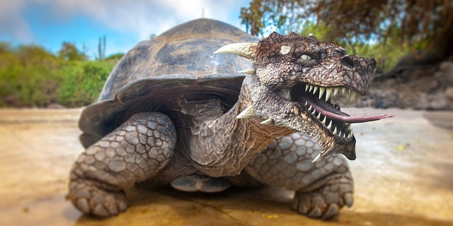 """If you're watching """"Game of Thrones"""" this weekend, be sure to listen for the giant tortoise mating calls."""