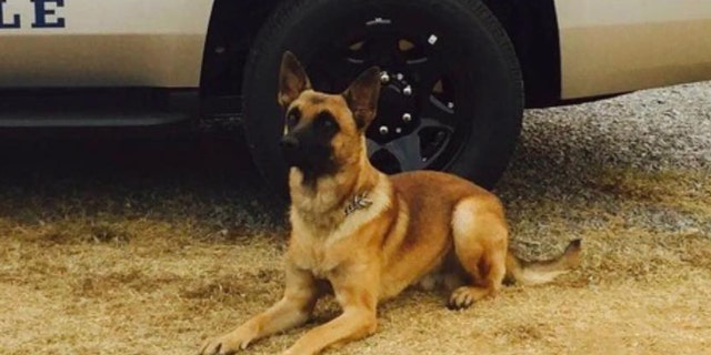 A K-9 in Tennessee is being hailed a hero after the dog helped stop a suspect fleeing a stolen vehicle Saturday evening, authorities said. (Knoxville Police Department)
