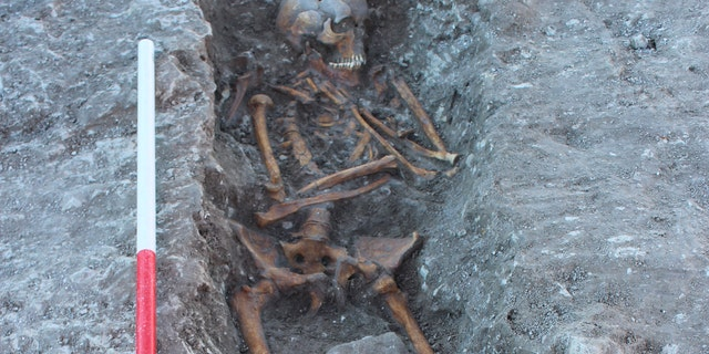 One of a skeletons unclosed during a site. (Thames Water)