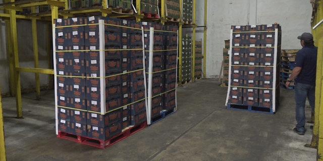 Knight said his fridge warehouse is almost always full, even with the floor covered in pallets. It hasn't been like that recently, as floors have been bare and some parts of the facility has been empty.
