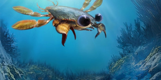 "An artistic reconstruction of Callichimaera perplexa: the ""strangest crab that has ever lived."" (Credit: Oksana Vernygora, UAlberta)"