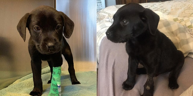Upon examination at the hospital for seizures and weight loss, vets also learned that the dog had been born deaf, and was possibly also visually impaired, WABI 5 reports.