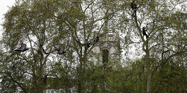 Protesters are seen in the trees during a climate protest in Parliament Square, in London, on Tuesday. (AP)