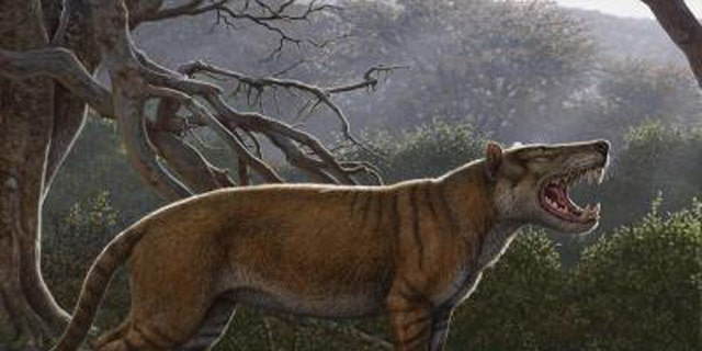 Simbakubwa kutokaafrika, a gigantic carnivore known from most of its jaw, portions of its skull, and parts of its skeleton, was a hyaenodont that was larger than a polar bear. (Credit: Mauricio Anton)