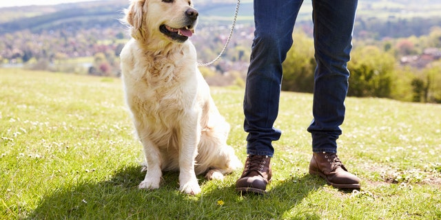 """Our findings should be used to justify the provision of dog-supportive environments for walking and pet-friendly housing,"" a researcher said."