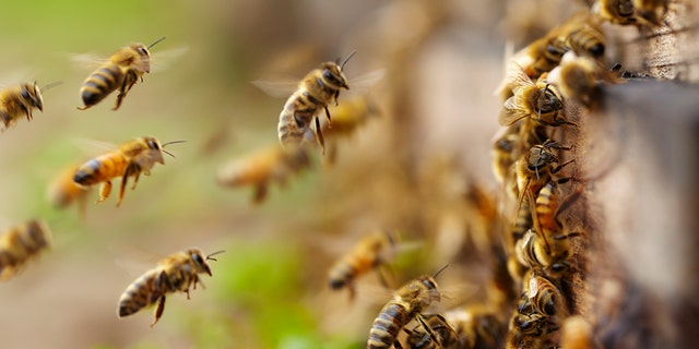 A man was killed after being attacked by a swarm of bees in Arizona on Sunday, according to police.