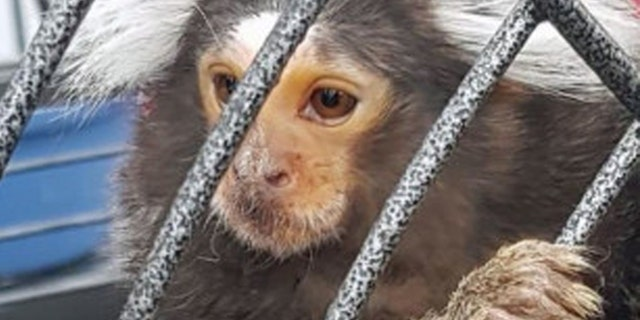 A monkey in a cage was discovered during a police raid in Dublin on Friday, according to police.