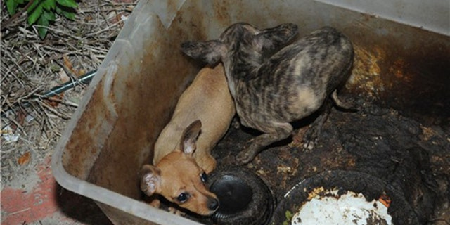 Puppies found they were living in their own feces in a Florida house full of garbage, urine and feces.