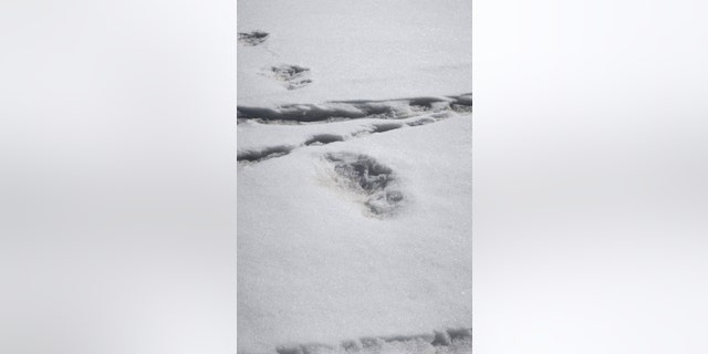 Largely regarded by the scientific community as a myth, the Yeti is part of Nepali folklore and is said to live high in the snow-capped Himalayas. In a tweet accompanied by pictures, the Indian army said it had sighted footprints measuring 32 by 15 inches (81 by 38 cm) close to a camp near Mount Makalu. Indian Army/via REUTERS